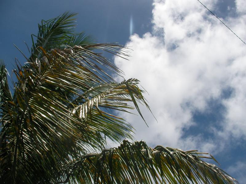サイパン ヤシの木と空