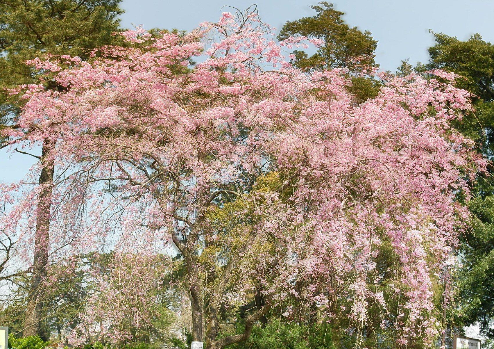 小田原 城山公園