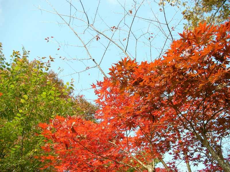 城山山頂の紅葉